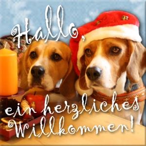 Beagle - Weihnachtsbegrüßung