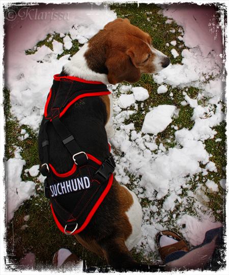 Suchhund1