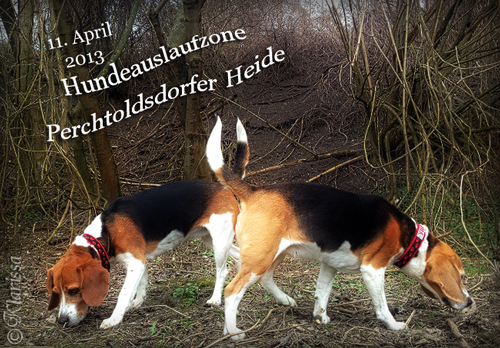 Perchtoldsdorf2